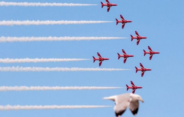 'Photobombing' seagull 'flies in formation' with Red Arrows