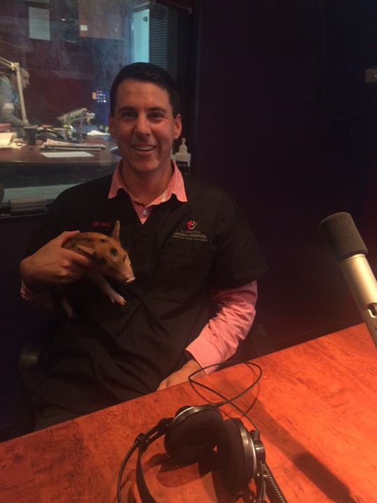 How cute is this little piggy! Dr Paul joins us…