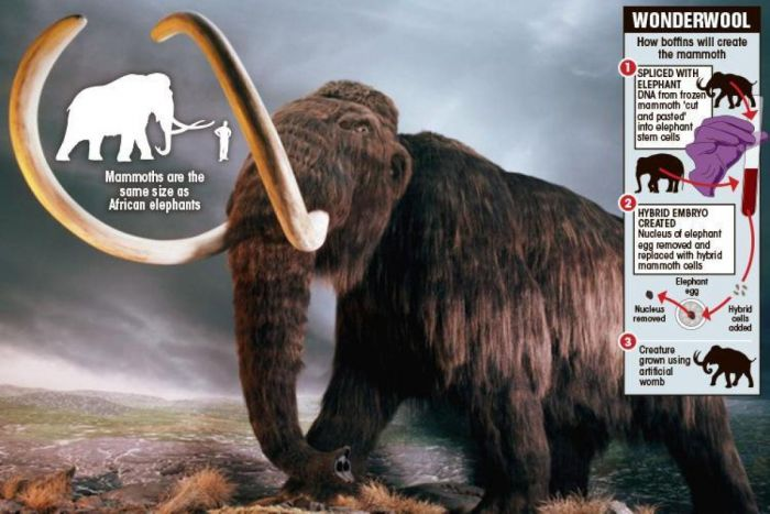 Woolly mammoths could be roaming Earth again 'within two years'
