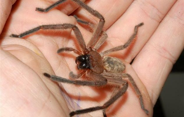 Spiders could rule the world (if they were into that sort of thing)