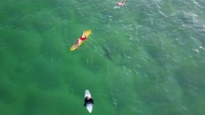 Shark swims by unsuspecting surfers at Kiama